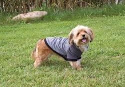 pullover hundtäcke